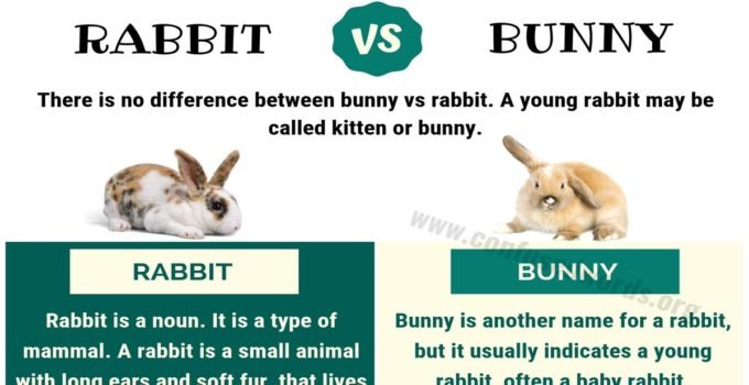 Bunny vs Rabbit