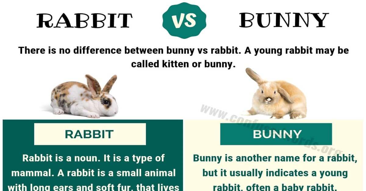Bunny vs Rabbit